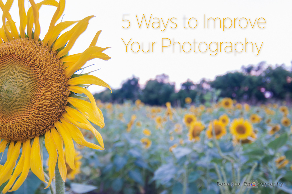 5 Ways To Improve Your Photography